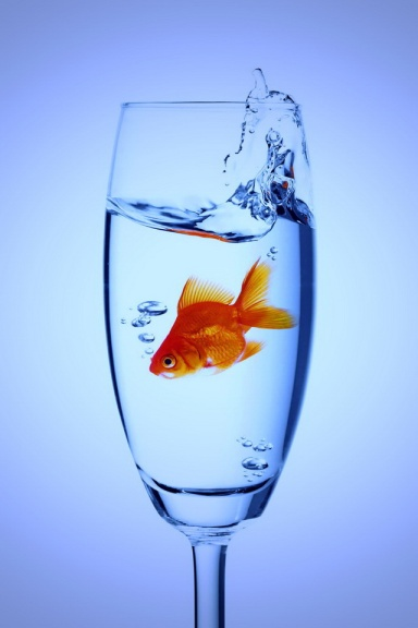 fish in glass